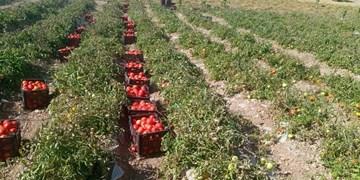 تولید سالانه 40 هزار تن محصولات کشاورزی در تفتان