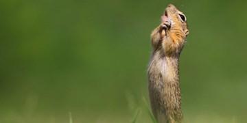 ۲۰ عکس دیدنی برگزیدگان نهایی «جوایز عکاسی کمدی حیات وحش ۲۰۲۰»
