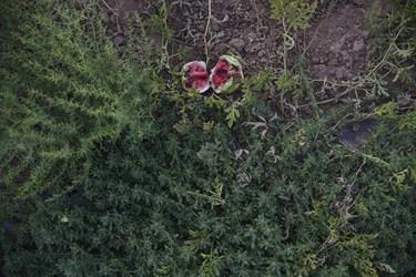 هندوانه رجعین زنجان که کشاورزان  پس از برداشت اولیه ، به دلیل بالا بوده هزینه برداشت و فروش به قیمت پایین، ترجیح میدهند هندوانه را بر روی زمین رها کرده که اغلب آنها بر سر زمین خراب شده و یا غذای پرندگان میشوند.