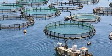 بومیسازی ۷۵ درصدی تجهیزات مجتمعهای پرورش ماهی در دریا