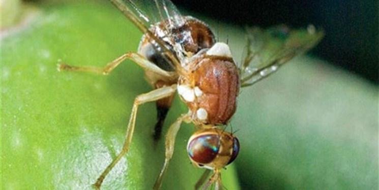 کم  توجهی به شاخص های اقتصادی کنترل بیولوژیک آفات در کشور