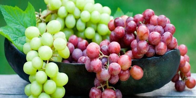 افزایش ۲۰ درصدی تولید انگور در سمنان/ طرح «فراز» در تاکستانها اجرا میشود