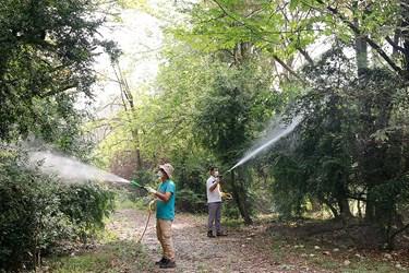 ععمليات سم پاشی  درختان شمشاد در پارك جنگلي سي سنگان نوشهر