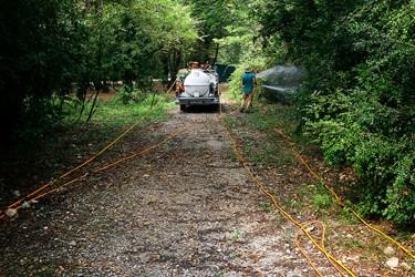 عمليات سم پاشی  درختان شمشاد در پارك جنگلي سي سنگان نوشهر