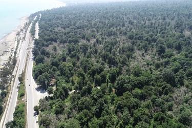 پارك جنگلي سي سنگان و درختان خشك شده شمشاد براثر آفت شب پره شمشاد