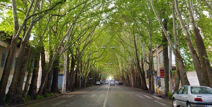 اما و اگرها درباره دالان سبز خوانسار/ افول زودرس سایه درختان فرا میرسد؟