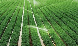 رشد بهرهوری کشاورزی در خراسانجنوبی با شبکه نوین آبیاری
