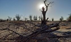 بزرگترین جنگل کهور منحصر به فرد ایرانی در حال نابودی