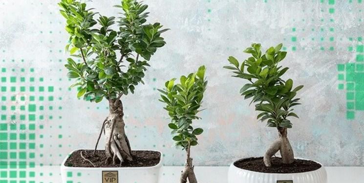 کاشت گل و گیاهان پاییزی در 6 قدم؛ از خرید گل تا نگهداری