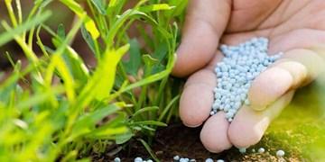 از توجیه مسوولان در خصوص افزایش قیمت  و کمبود کود تا مرگ تدریجی کشاورزی در گلستان