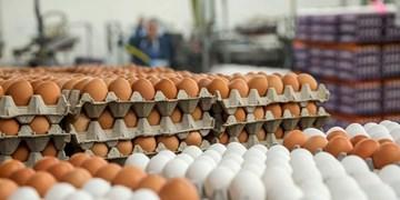 تخممرغ همچنان در اوج/ چرا قول وزیر جهاد کشاورزی عملی نشد؟