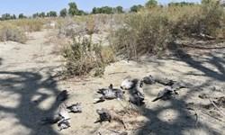 فیلم|گزارش فارس کارشناسان محیط زیست را به روستای گنجک زرآباد کشاند
