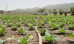 آبگیری ٣۵ هزار هکتار از اراضی کشاورزی سیستان درنوبت دوم آبیاری