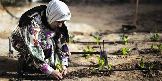 باید کشاورزان را با علم روز آشنا کرد/ آموزشهای وبینار برای کشاورزان در دوران کرونایی