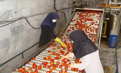 خامفروشی، آفت صادرات محصولات کشاورزی/ صنایع تبدیلی، راه نجات از بنبست اقتصاد نفتی