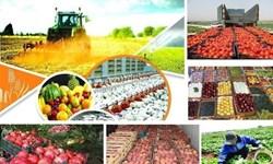 اختصاص۲۱.۲ درصد اشتغال و ۱۲.۵ درصد صادرات غیرنفتی آذربایجانشرقی به بخش کشاورزی