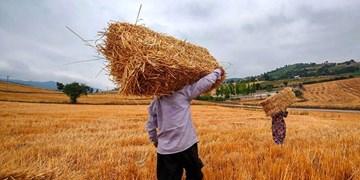 پول خرید بذر کشاورزان سمنانی رسید