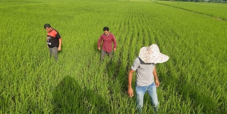 ساماندهی 270 شغل کشاورزی در کشور/ اتاق اصناف کشاورزی تشکیل میشود