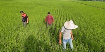 پیگیری مطالبه کشاورزان در فارس من؛ پشتپرده پرواز بهای کودهای شیمیایی چیست؟