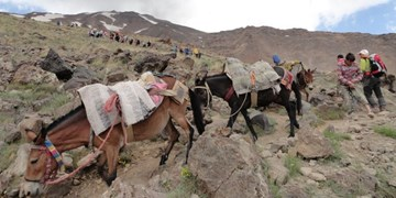 فتح ارتفاع4 هزار متری با قاطر و شاسی بلند/ بام ایران در قرق پسماند کوهنوردان