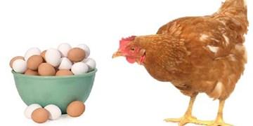 صنعت مرغداری کشور پس از خودروسازی بزرگترین صنعت کشور