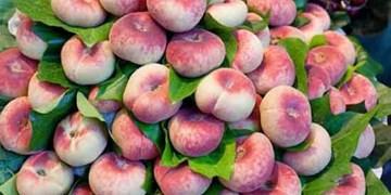 کاشت ۴۱ نوع هلو در شبستر/ بازار ۱۷۰ میلیارد تومان هلو  شبستر و  جولان دلالان