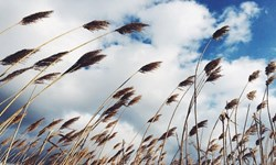 وزش باد جنوبی و افزایش دمای هوا در اردبیل