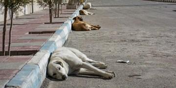 جولان سگهای بلاصاحب در شهر پرند+فیلم