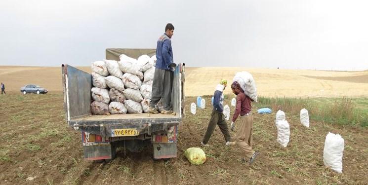 صادرات 400 کامیون سیب زمینی به عراق