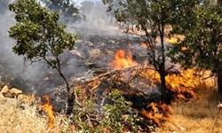 آتشسوزی در پارک ملی دز مهار شد