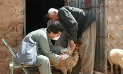 واکسیناسیون ۱۰۰ هزار رأس دام سبک در لامرد