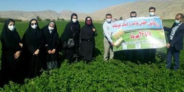 اجرای طرح بسیج همگام با کشاورز در فیروزآباد
