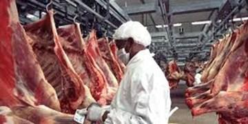 خرید ١٠٠٠تن گوشت قرمز از دامداران در سیستان وبلوچستان
