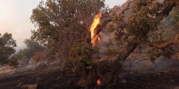 آتشسوزی در ارتفاعات منطقه حفاظتشده سالوک