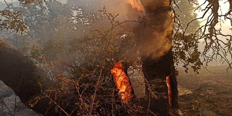 مهار حریق در ارتفاعات «درنه و کوگاه»/ بیش از ۷ هکتار از مراتع و جنگلهای ثلاث باباجانی در آتش سوخت