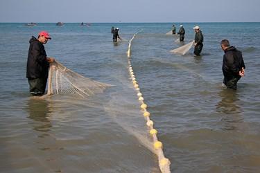 صيادان در حال بالا كشيدن تور از دريا هستند. تور ماهيگيری كه به روش پره صيد میشود دارای 25 متر عرض و 1000 متر طول است.