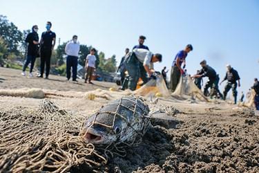 ماهی کفال كه در تور صيد پره صيادان گرفتار شده است.  قطر سوراخهای تور پره به اندازهای است که تنها ماهیان بالغ را صید میکند  (در حدود ۳۰ الی ۴۰ میلیمتر).