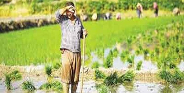 پیچ و خمهای طرح «کشاورز_کارت» راه را برای مشکل نقدینگی کشاورزان هموار نکرد