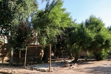 در ماههای گذشته قسمت بزرگی از بلندترین درخت هتل بر اثر موریانه خوردگی شکست و روی دیگر درختان سقوط کرد