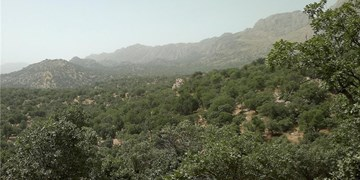 عملیات مبارزه با آفت جوانهخوار در جنگلهای کردستان آغاز شد
