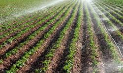 تحقق 91 درصدی کشت گندم پاییزه در آذربایجان شرقی