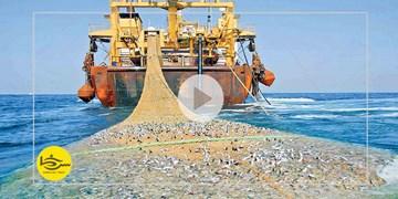 سرخط  فارس| ابهامات ممنوعیت صید ترال