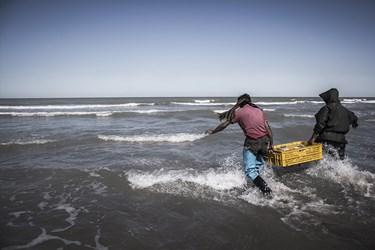 رسمان  ماهی هایی که در ابعاد و اندازه مطلوب نیستند را دوباره به دریا برمیگرداند