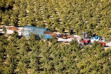 در روستای محمدآباد محصولات بسیاری همچون انار،گلابی،قیسی،گردو و خرمالو کشت می شود اما انار محصول غالب است.