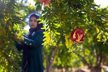 زنان در روستای محمودآباد پابه پای مردان کار می کنند.