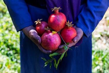 در محمودآباد انارهای مختلفی از قبیل پوست نازک،دونه سیاه و شیرین برداشت می شود.