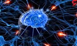 راه اندازی مرکز زیست بانک مغزی در دانشگاه علوم پزشکی مشهد