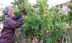 فیلم  باغی پرثمر که هر ساله محصولاتش وقف فقرا میشود