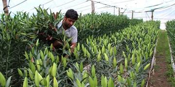 فعالیت ۱۲ گروه جهادی در حوزه کشاورزی/جهش تولید در 2 سطح زراعی و دامی