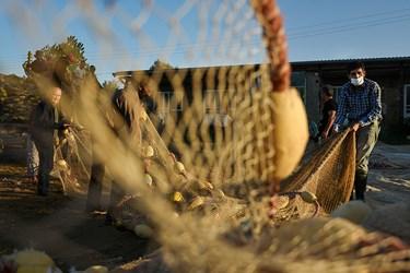 کار جمع اوری و بافت مجدد تور از یک هفته قبل از شروع فصل صید آغار می شود